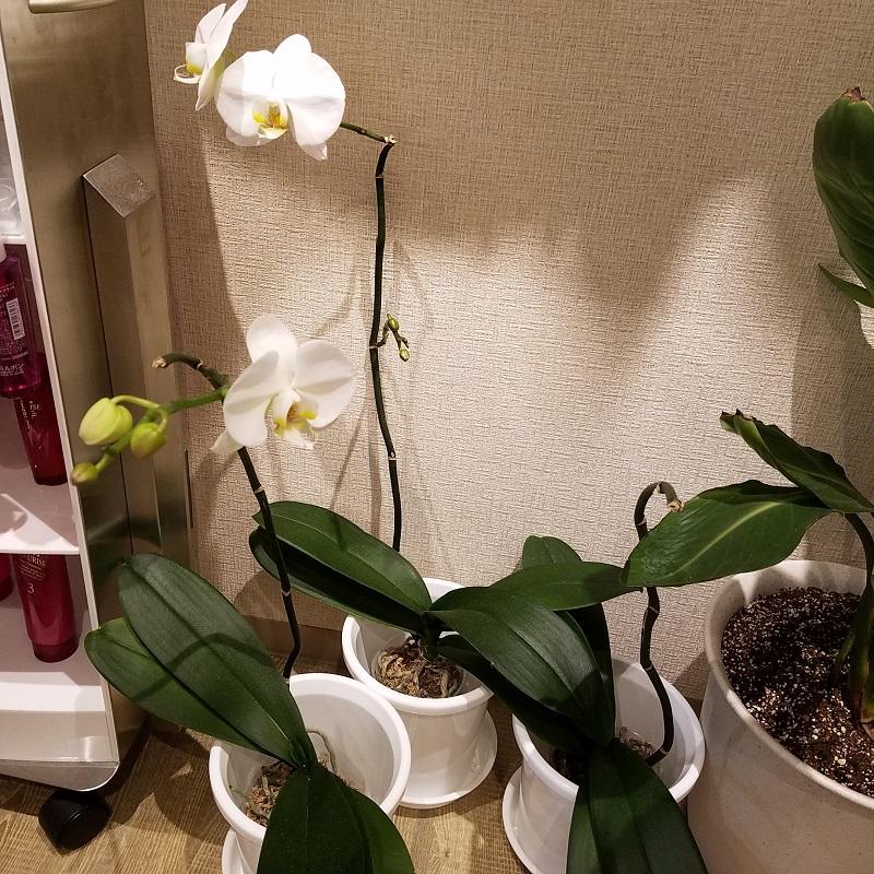 ハーフバースデー 行徳駅にある美容室CoCoChi(ココチ)